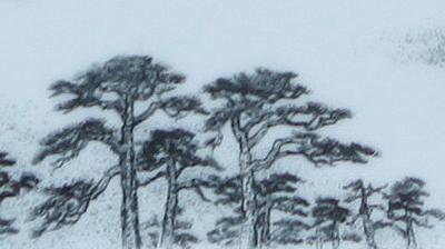 图4-92 松树雕刻效果2.JPG